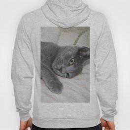Russian Blue Kitten Relaxed On A Bed Hoody
