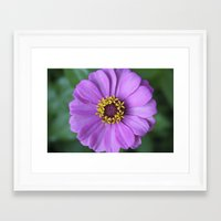 rileigh smirl Framed Art Prints featuring Purple Flower by Rileigh Smirl