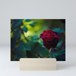 Single Red Rose - Botanical Photography Mini Art Print