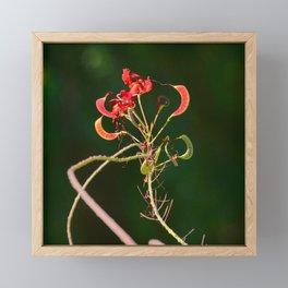 Firecracker Red Exotic Flower Art Photo Framed Mini Art Print