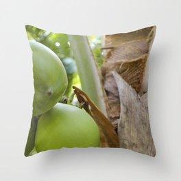 Green Coconut Throw Pillow