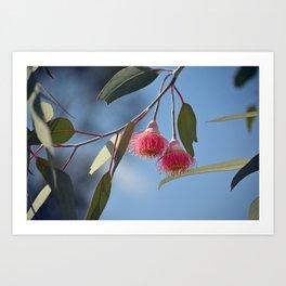 Eucalyptus Silver Princess Blossoms II Art Print