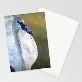 Trumpeter Swan floating on the water Stationery Cards