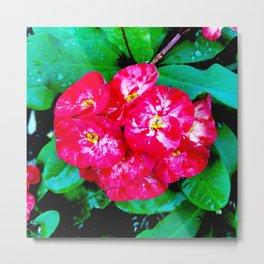 Flowers_109 Metal Print
