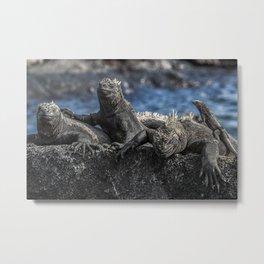 Iguanas relaxing sunbathing on rock at beach Metal Print