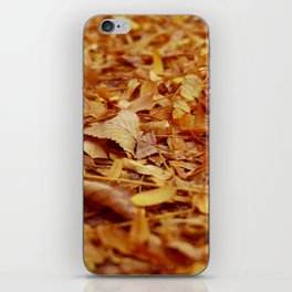 The Autumn leaves iPhone Skin