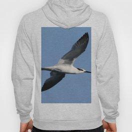 Sandwich Tern In Flight Vector Hoody