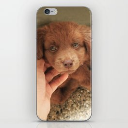 Potter's Cute Begining: A Gentle Look iPhone Skin