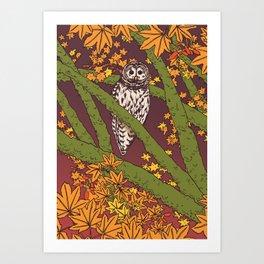 Barred Owl & Maple Art Print