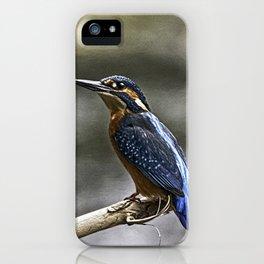 Eurasian Kingfisher (Alcedo atthis) iPhone Case