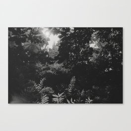 Under the leaves... Canvas Print