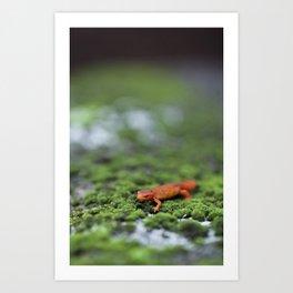 Orange Salamander Travels Art Print