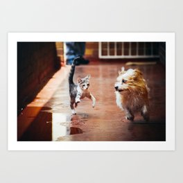 Kitten And Dog Running And Playing Together Art Print