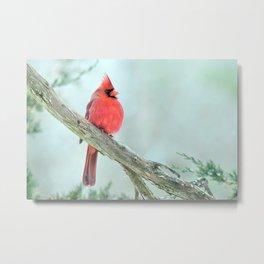 Elegant Cardinal Metal Print
