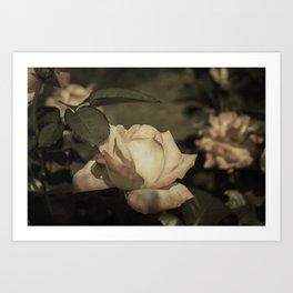 Vintage Rose Garden Art Print