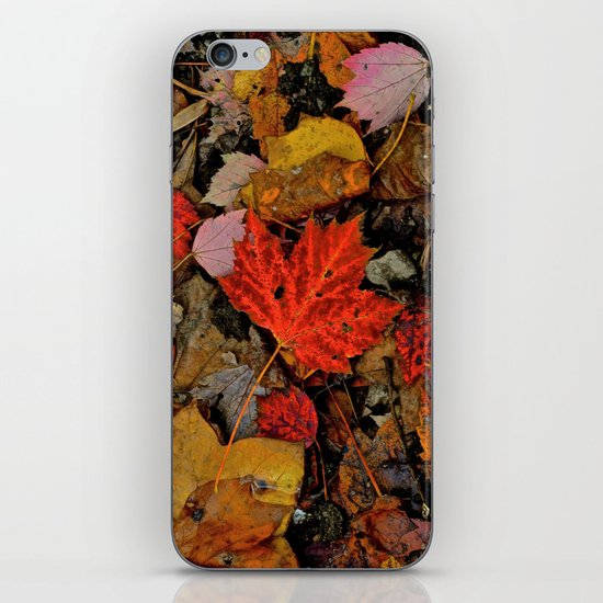Nature's Palette iPhone & iPod Skin