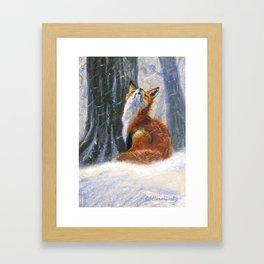 Red Fox - Vixen Sniffs the Snow Framed Art Print