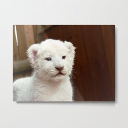 I will hug him and pet him and squeeze him and I will name him George - White Lion Cub Metal Print