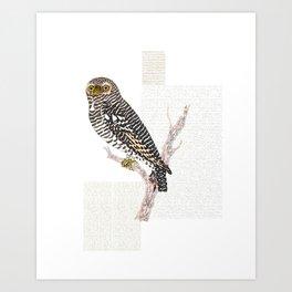 Hawk Owl Watercolour Art Print