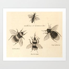Naturalist Bees Art Print