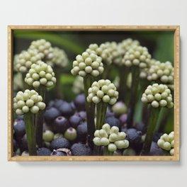Green Aralia Flowers Serving Tray