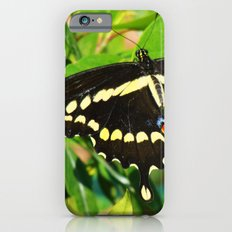 A Pretty Butterfly Slim Case iPhone 6s