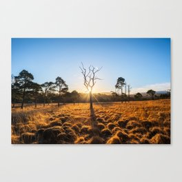 Coronation Plantation - Ireland (RR220) Canvas Print