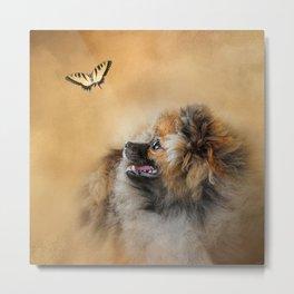 Butterfly Dreams - Pomeranian Metal Print