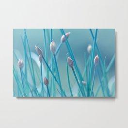 Allium turquoise 95 Metal Print