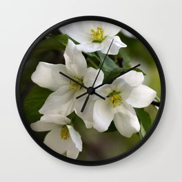 White flowers of apple trees on the branch Wall Clock