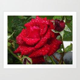 Rød rose Art Print