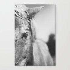 The Spirited Horse Canvas Print