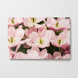 Pink Flowers (Color) Metal Print