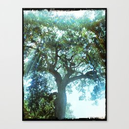 Ramona Oak Tree Canvas Print