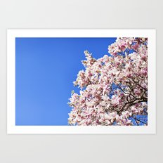 dogwood tree Art Print