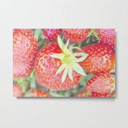 Beautiful fresh strawberries Metal Print