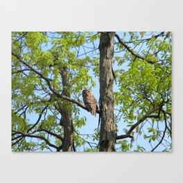Bard Owl baby Canvas Print