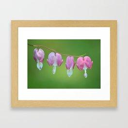 Bleeding Hearts Framed Art Print