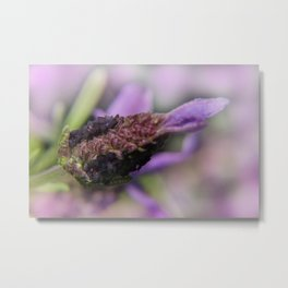 the beauty of a summerday -132- Metal Print