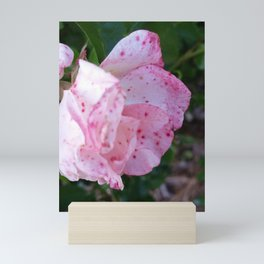 Speckled rose Mini Art Print