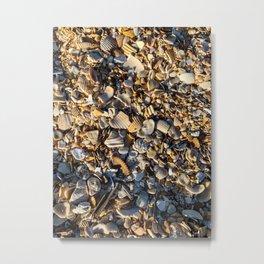 Seashells In The Sand Metal Print
