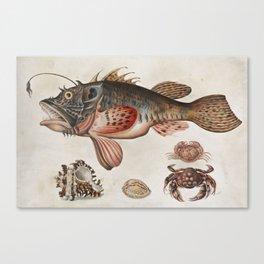 Vintage Fish and Crab Illustration by Maria Sibylla Merian, 1717 Canvas Print