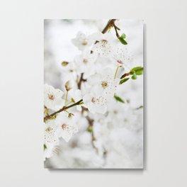 White blooming Metal Print