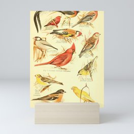 William Playne Pycraft - A Book of Birds (1908) - Plate 28: Finches, Sparrows, Canaries etc Mini Art Print