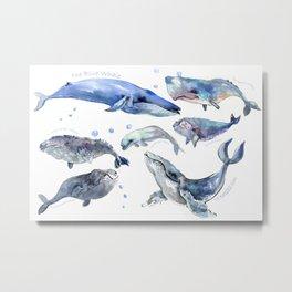 Whales, Whale design, whale wall art, sea, marine aquatic animal art, school learning wall Metal Print