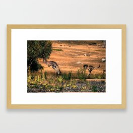 Spooked Kangaroos Framed Art Print