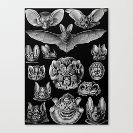 1904 Haeckel Chiroptera Canvas Print