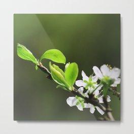 fleur de pommier Metal Print