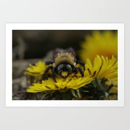 Winter Bee Art Print