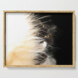 Fluffy Calico Cat Serving Tray
